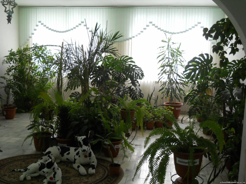 Зеленый уголок в квартире фото